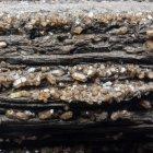 Tagebau Espenhain, verkieseltes Holz mit Quarzkristallen, Detailaufnahme