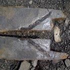 Ein großer Koprolith - kurz nach dem Fund