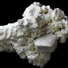 Seesternfragment (10 mm x 7 mm  x 5 mm)