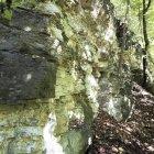 Aufschluss des Unteren Muschelkalkes / Unterer Wellenkalk bei Gerstengrund
