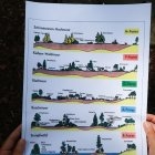 Bild 13: Entwicklung des Braunkohlenwaldes